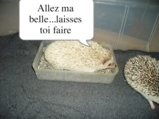 Aaahhh l'amour!!! PICT0681