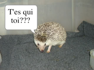 Aaahhh l'amour!!! PICT0686