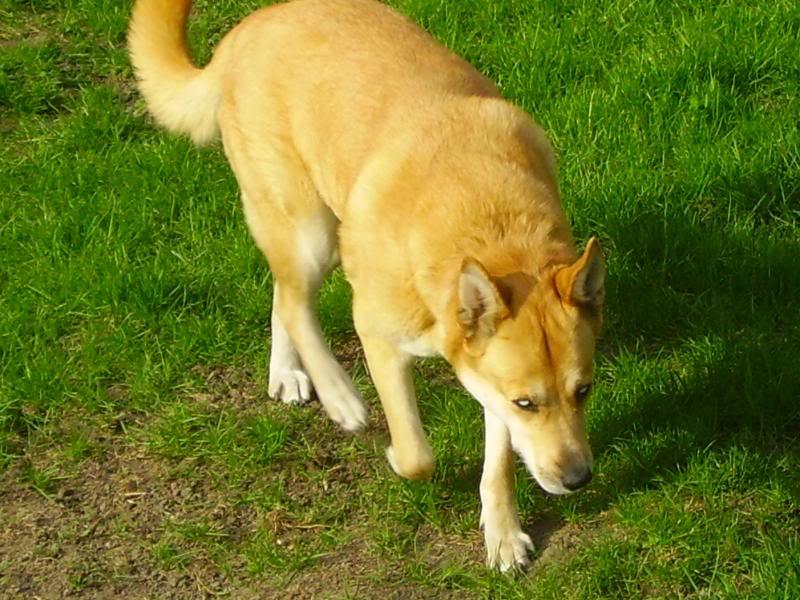 Foxy PICT0901