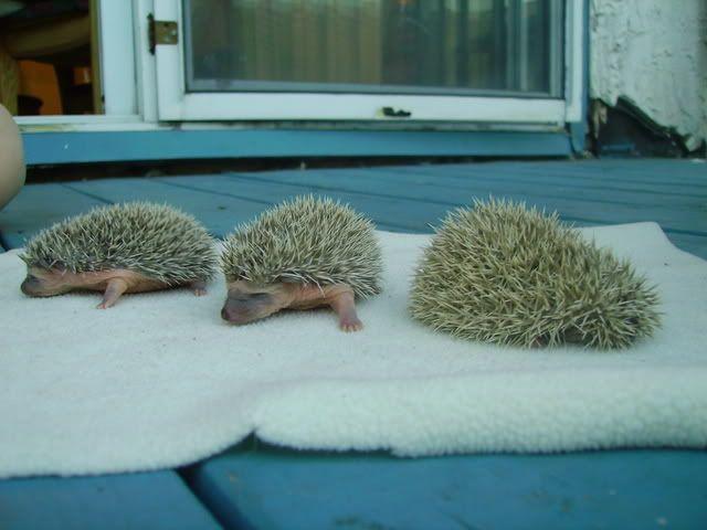 Les bébés de Kira & Tonka (photos) PICT1364