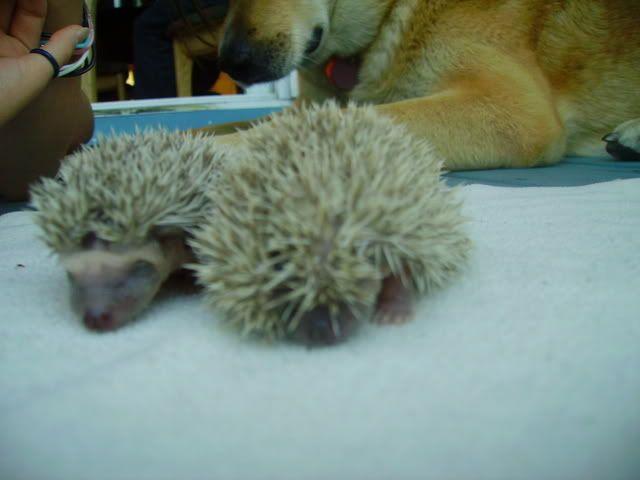 Les bébés de Kira & Tonka (photos) PICT1372