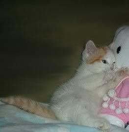 Котята Kitty2