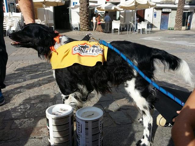 Canis - Paquito  12072796_850324805065283_2111808112547607481_n_zpsxu57pnfk