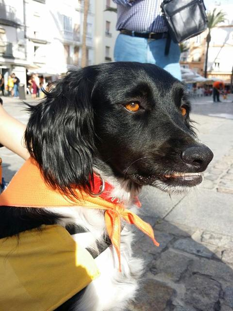 Canis - Paquito  12119006_850324748398622_359031819289564655_n_zpsuzre70gb