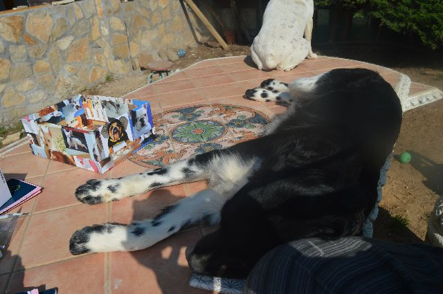 Canis - Paquito  DSC_0049_zps5e7db90c