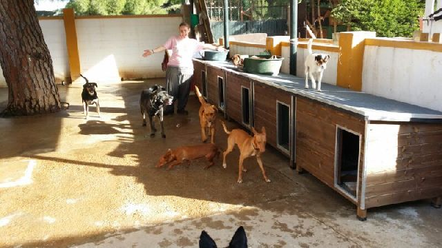 Canis - Duna IMG-20140202-WA0008_zps9d0f95fa