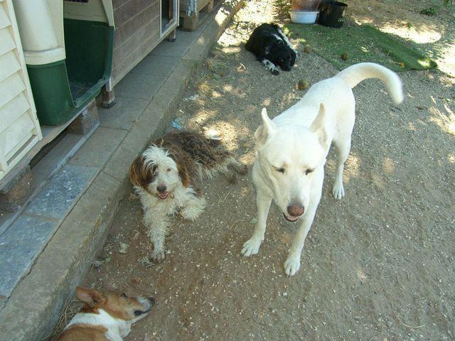 Canis - Paquito  11202559_812127918884972_7724878705856378391_n_zpsndixnfz2