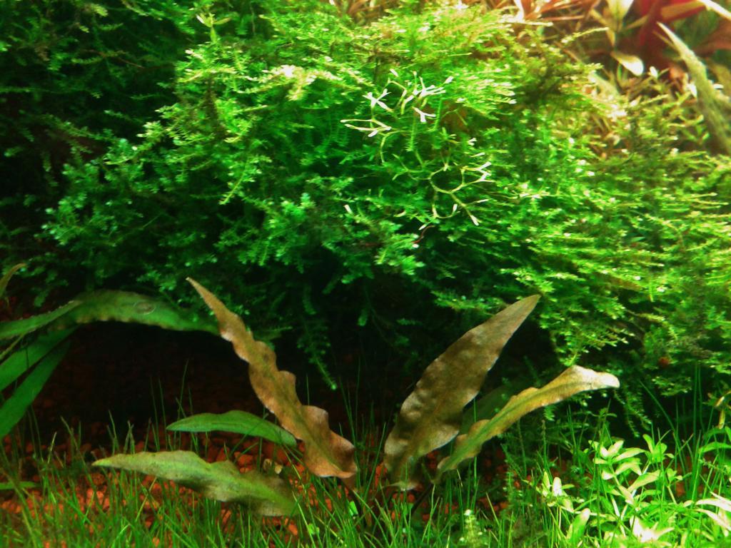mi acuario de Escalares amazonicos (donacion de un acuamigo) 2014-06-20102422_zpse5845000