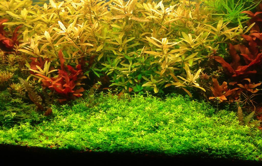 mi acuario de Escalares amazonicos (donacion de un acuamigo) 2014-06-20102618_zps1a7bd1ac
