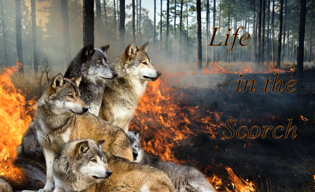 ¤ Life in the Scorch ¤ Dereks%20Pack%20Request_1