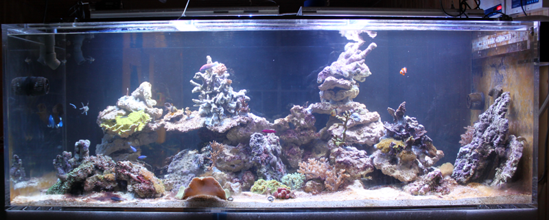 The aquarium thread - Page 2 IMG_6678