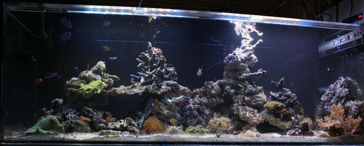 The aquarium thread - Page 2 IMG_6763