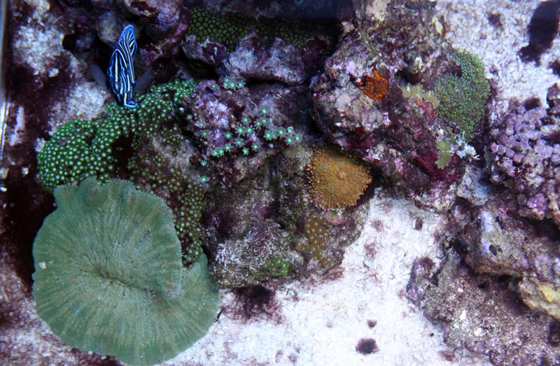 The aquarium thread - Page 2 IMG_6822