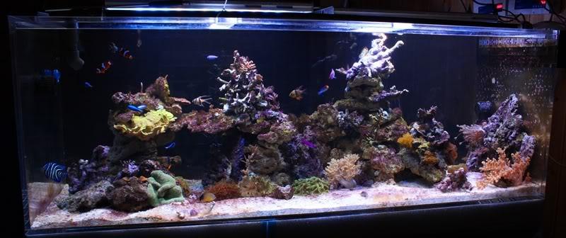 The aquarium thread - Page 2 IMG_6962