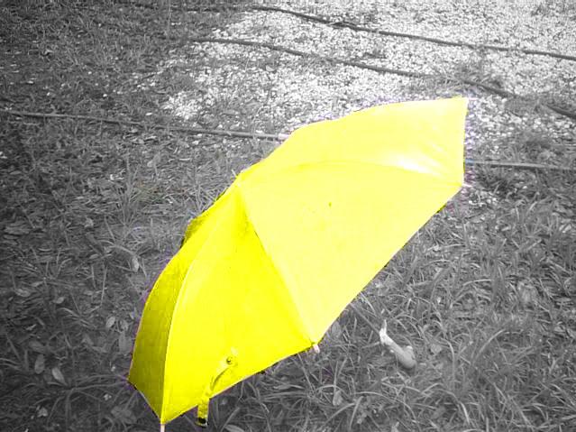 Volim žuto - Page 3 PHTO0075