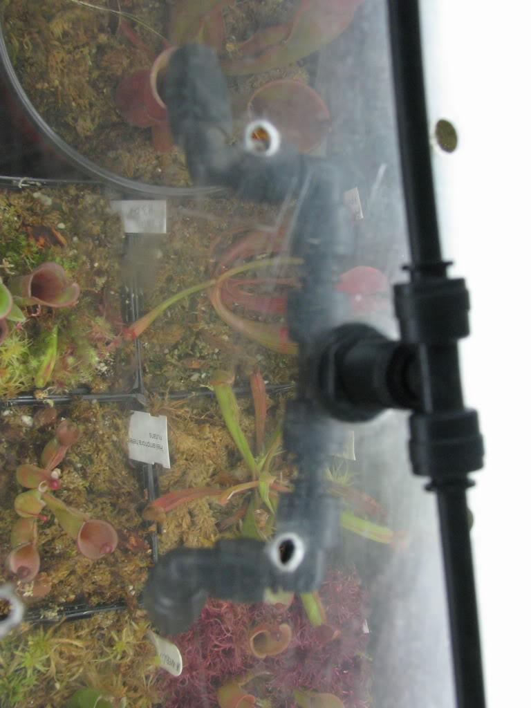 Une couple d'heliamphora Pictures09mauriceplantsfriends1607