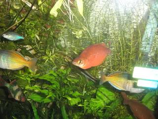 Akvarij PA310630