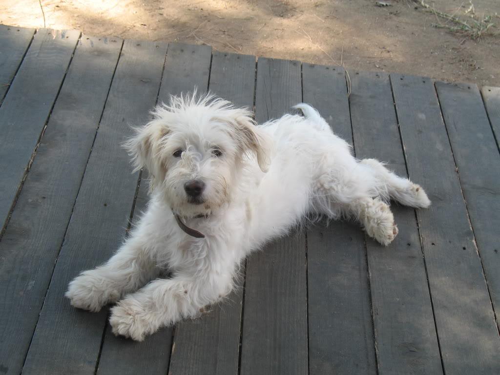 Psi i psići (kinologija, pasmine pasa, obuka pasa, dresura pasa, lovački psi, kućni psi, hranidba pasa, slike pasa, Vaša najdraža pasmina pasa, izložbe pasa, šetanje pasa, kupanje pasa, perilica za pse, hrana za pse) - Page 5 IMG_1231