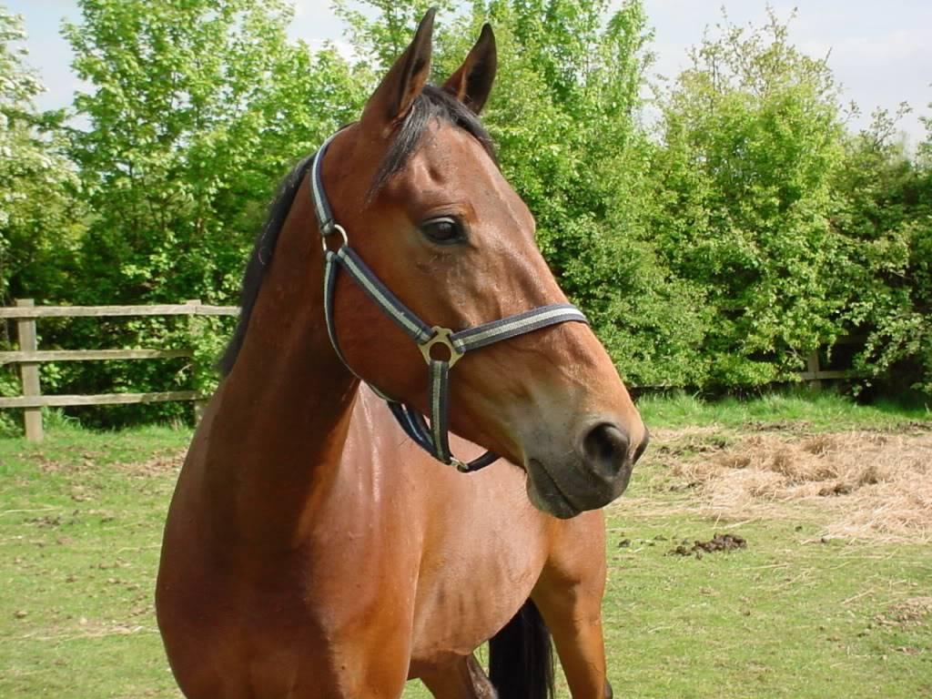 PRINCE NOIR - ONC né en 2004 - adopté en octobre 2008 par Rebecca - Page 5 DSC00110-1
