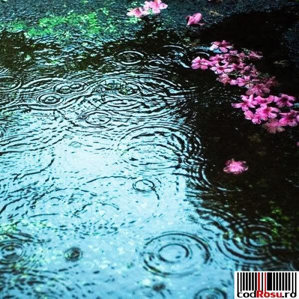 joc cu imagini Poze-de-toamna_prima-ploaie-de-toamna