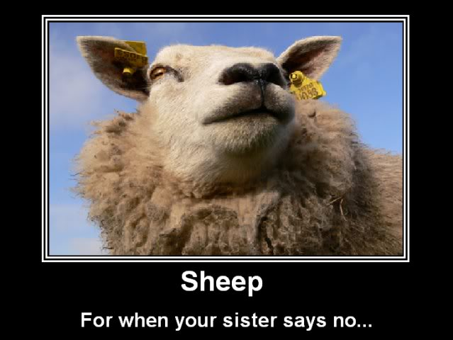 Random picture thread - Page 7 Sheep