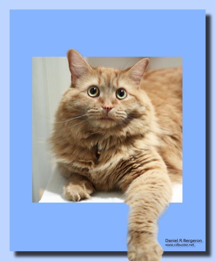 Après Kiti voici Garfield et son regard IMG_0500