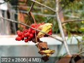 """Фотоконкурс """"Осенняя кантата"""" _4277e133ef8f9de1d723d36441700f6b"""