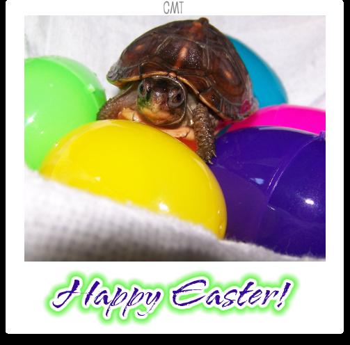 Happy Easter lol! Happeasterbycmt