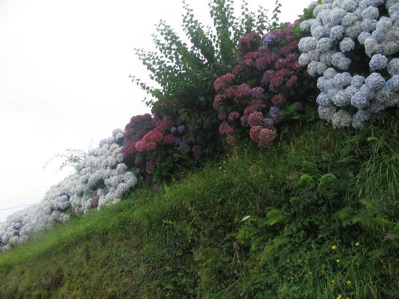 Amantes de las plantas ASTURIAS2007214copia