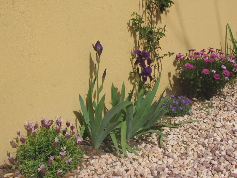 Mis dos pequeños jardines Jardiin055