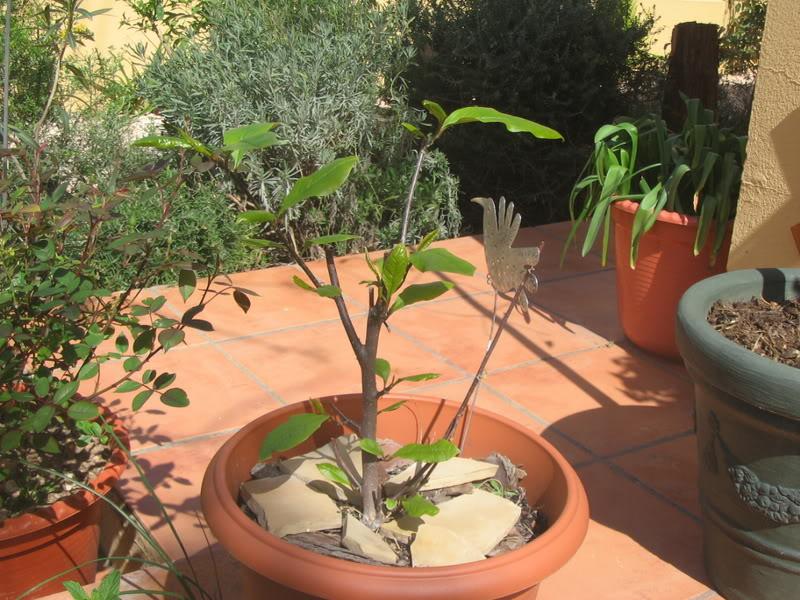 Mis dos pequeños jardines Jardiin056