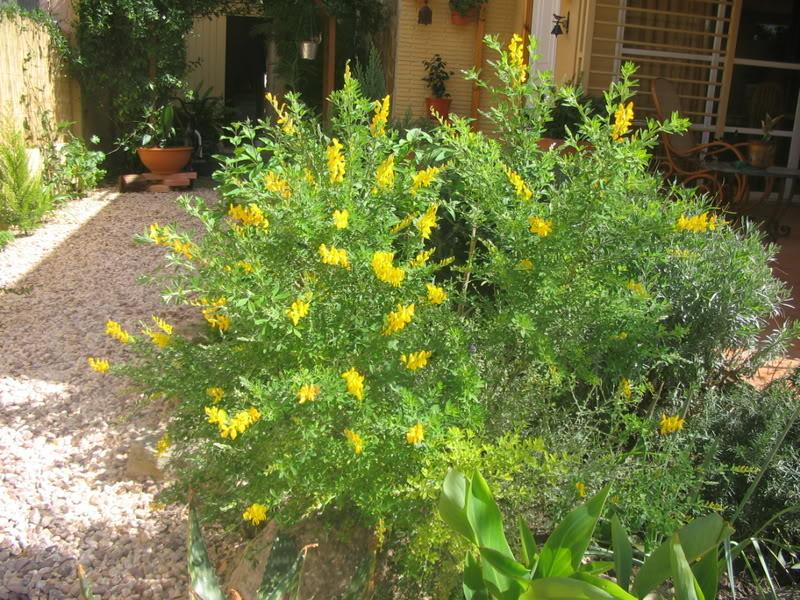 Mis dos pequeños jardines Jardiin057