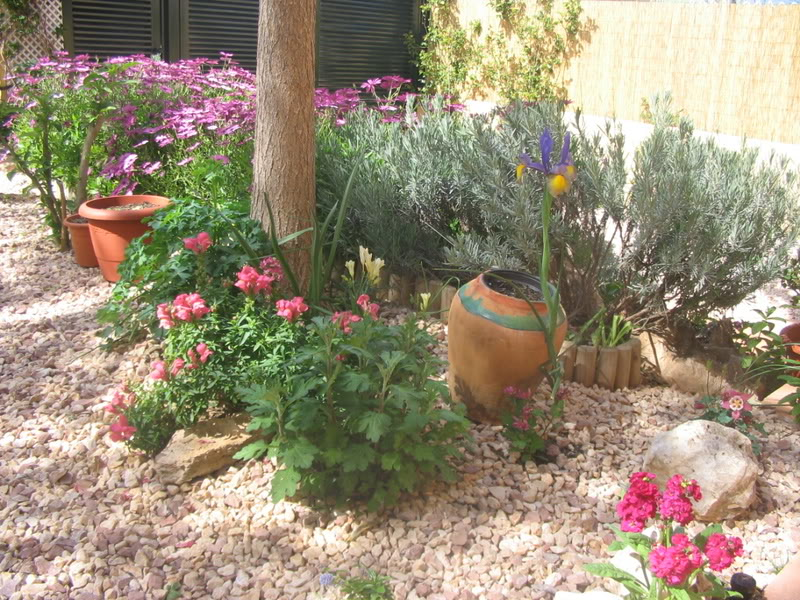 Mis dos pequeños jardines Jardiin062
