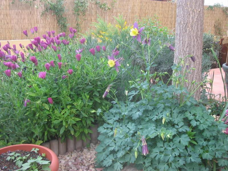 Mis dos pequeños jardines Jardiin094