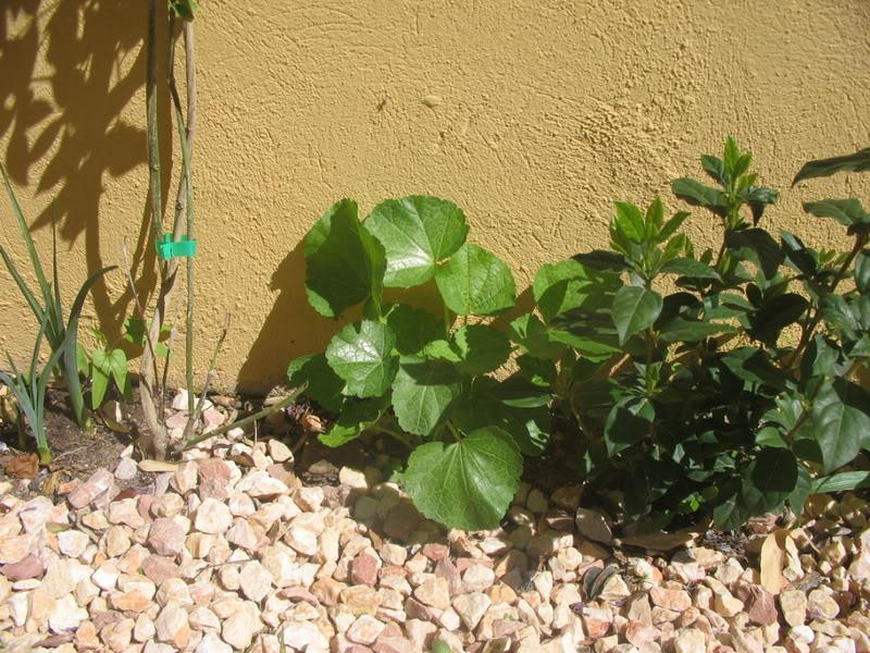 Mis dos pequeños jardines - Página 3 Jardiin119