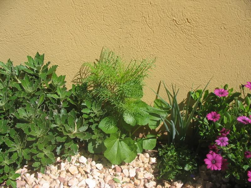 Mis dos pequeños jardines - Página 3 Jardiin120