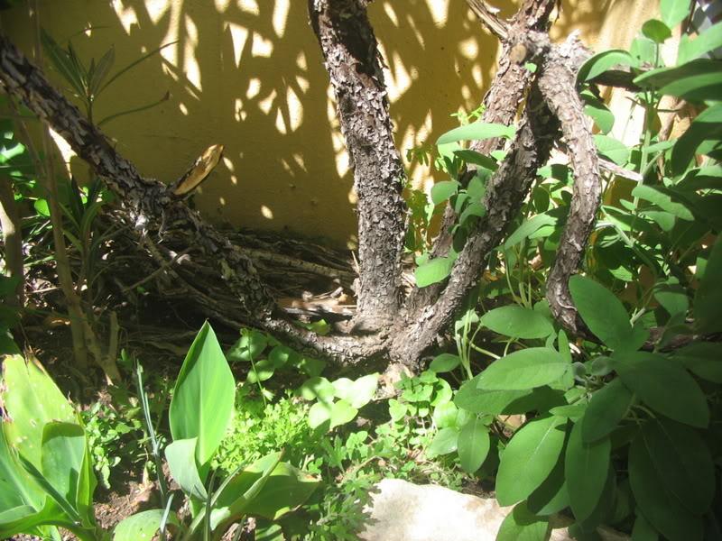 Mis dos pequeños jardines - Página 3 Jardiin121