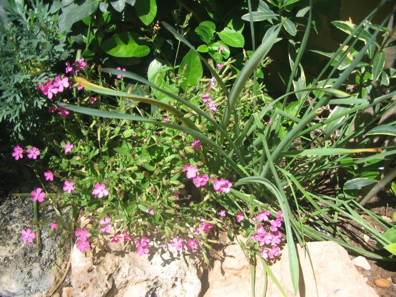 Mis dos pequeños jardines - Página 3 Jardiin122
