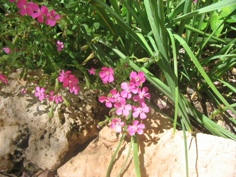 Mis dos pequeños jardines - Página 3 Jardiin123