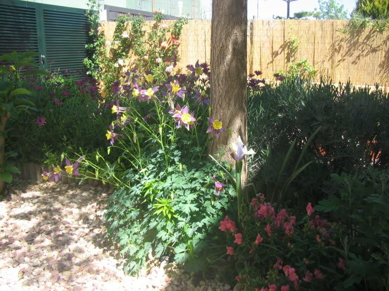 Mis dos pequeños jardines - Página 3 Jardiin125