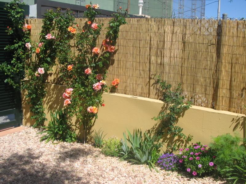 Mis dos pequeños jardines - Página 3 Jardiin127
