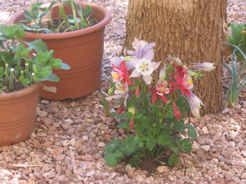 Mis dos pequeños jardines - Página 3 Jardiin128