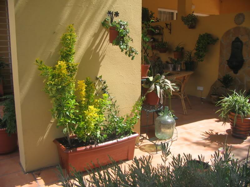 Mis dos pequeños jardines - Página 3 Jardiin133