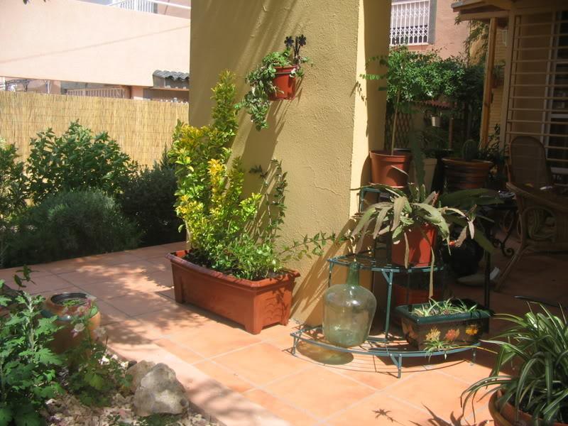 Mis dos pequeños jardines - Página 3 Jardiin134
