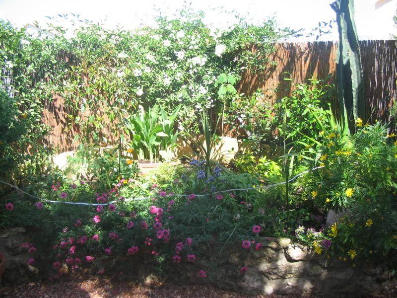 Mis dos pequeños jardines - Página 3 Jardiin146