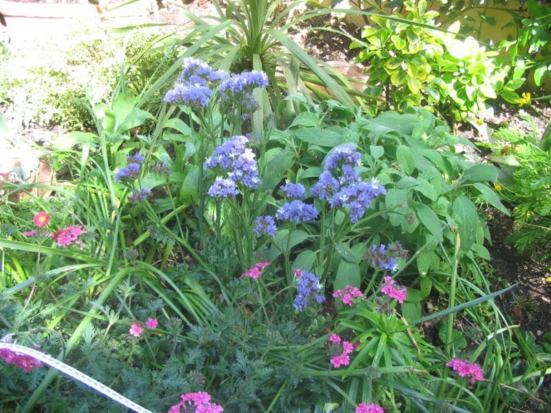 Mis dos pequeños jardines - Página 3 Jardiin147