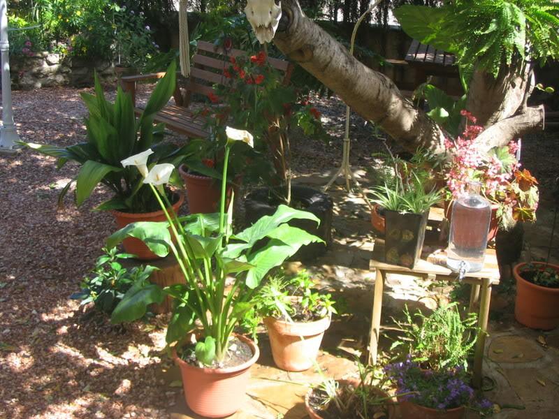 Mis dos pequeños jardines Jardiin148