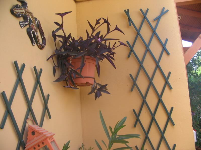 Mis dos pequeños jardines - Página 3 Jardiin149