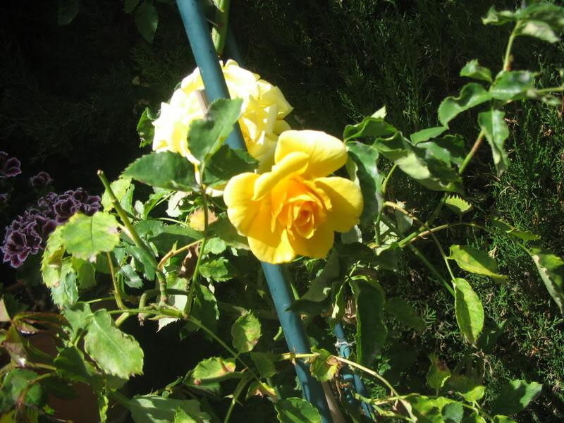 Mis dos pequeños jardines - Página 3 Jardiin150