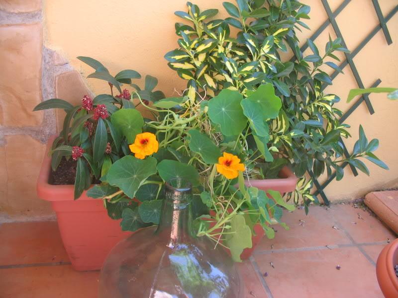 Mis dos pequeños jardines - Página 3 Jardiin151